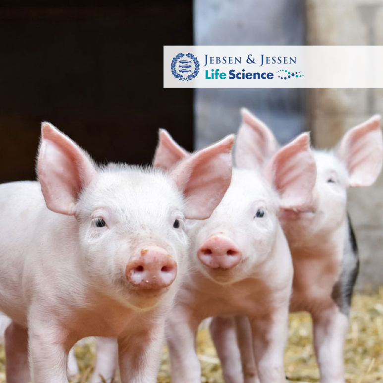 Food additives manufacturer, 3 small pigs
