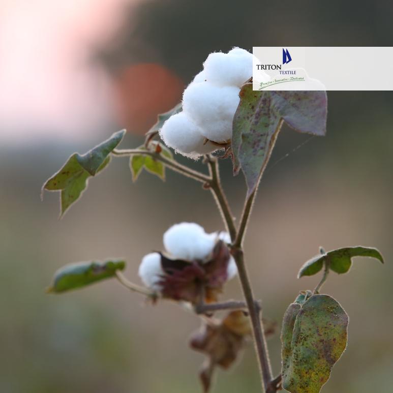 Nachhaltige Textilien Triton-Baumwolle